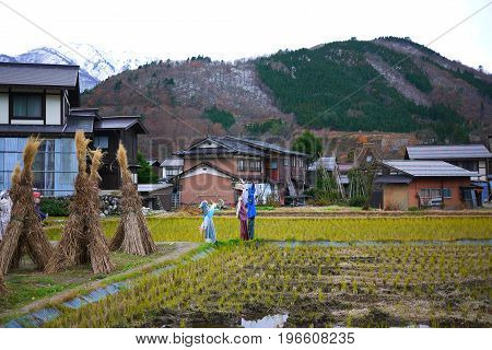 scarecrows and bundle of rice straw on field in rural