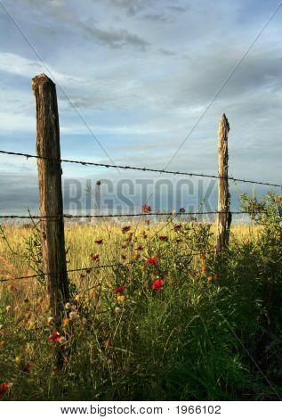 Fence Line Flowers