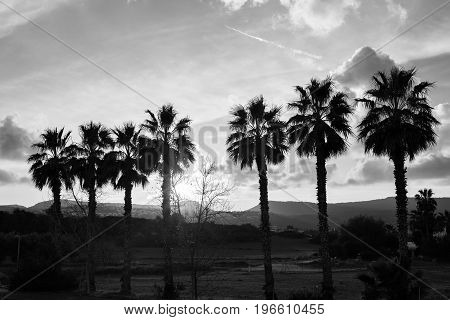 Row of palm trees against setting sun and mountains.