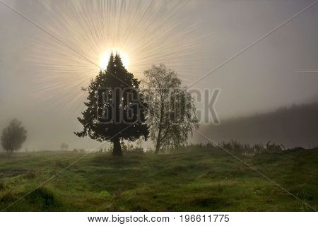 Tree in early morning mystic sunrise. Tree silhouette in fog and mysterious with sun beams