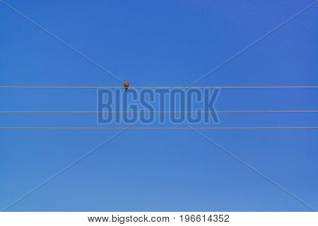Pigeon Perched On Electric Cable Wires With Blue Sky.