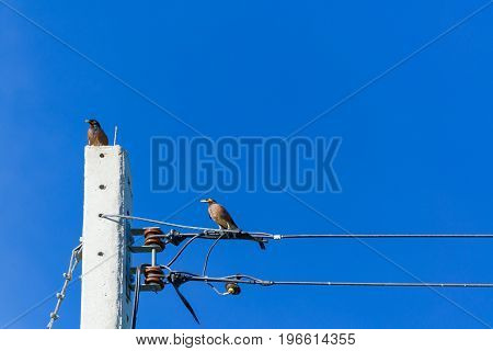 Bird Perched On Electric Cable Wires With Blue Sky.