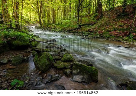 River Flow In Sunny Forest At Sunrise