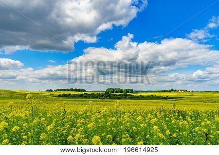 Beautiful rapeseed field on sunny summer day. Blossom canola or colza flowers against wonderful cloudscape