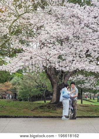 Nara, Japan - April 8, 2017 : Happiness of a Japanese family in Nara Park.They enjoying Cherry blossoms festival (Hanami) in park. Hanami is Japanese tradition of welcoming spring. This festival is available during the first week of April every year.