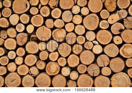 Background Of Tree Stumps, Natural Wood Background