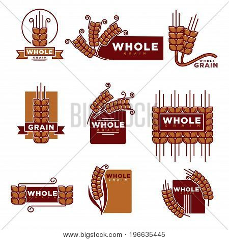 Cereal and whole grain products logo templates set for bakery shop or baking products muesli or organic porridge and flour package label design. Vector wheat, rye ears or buckwheat and oat or barley