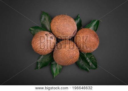 A composition of four hard coconuts on a saturated black background. Organic and natural coconuts on fresh green leaves. A group of brown coconuts full of delicious coco milk.