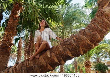 Smiling Young Woman Sitting On Palm Tree And Looking Up. Concept Happy Rest, Life Without Problems