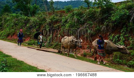 Hmong People On Rural Road In Northern Vietnam