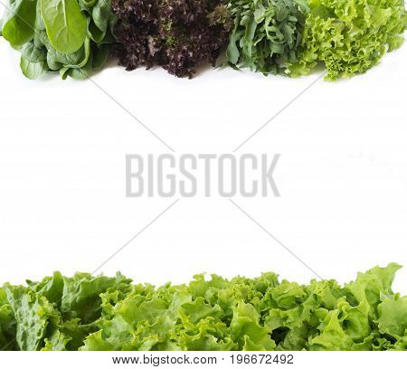 Arugula spinach red and green lettuce on a white background. Fresh lettuce at border of image with copy space for text. Top view.