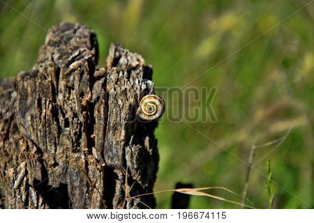 A small inhabitant of field meadows on the old stump