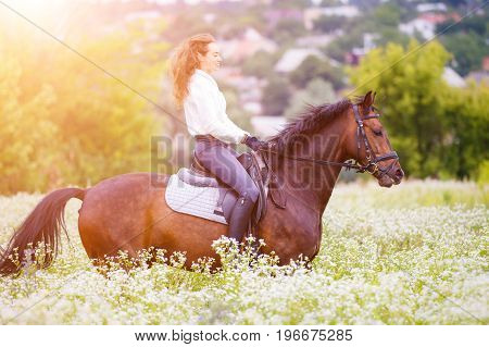 Young rider girl with long hair riding bay horse on camomile field at sunny day