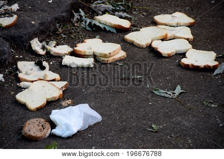 Slices of old bread thrown on the ground