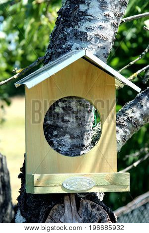 view on birdhouse birds in my garden