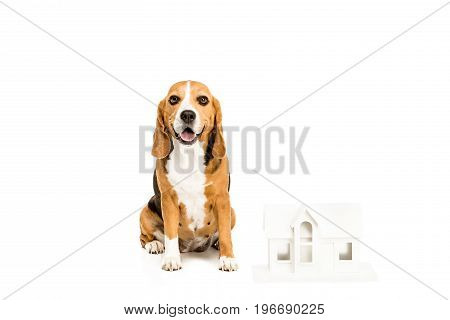 Beagle Dog With Paper House Model, Isolated On White