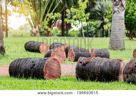 palm trees are cut on lawns in the garden.