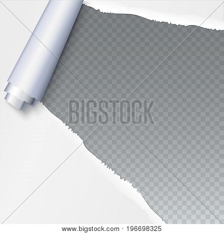 Realistic torn open paper with space for text on transparent background, holes in paper. Torn strip of paper with uneven, torn edges. Coiling torn strip of paper
