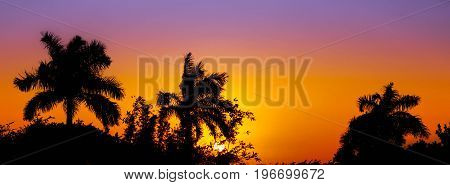 The sun hides between the palms leaving in the sky a magnificent colorful