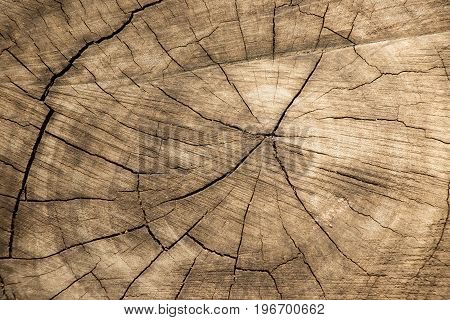 Closed up of brown aging tree stump background