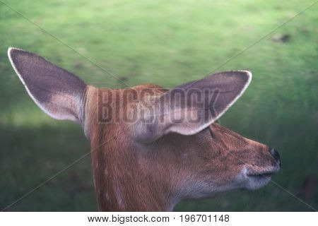 Close up image of a deer turn its back in a zoo with green nature background