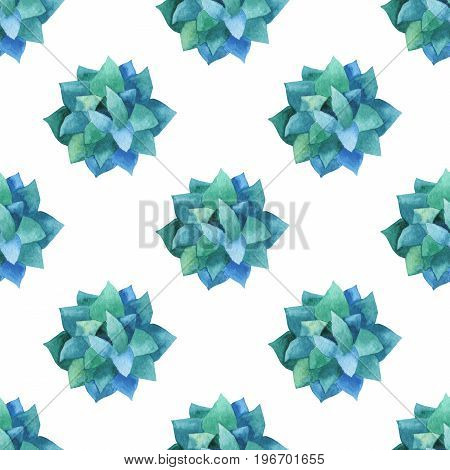 Hand painted pattern with succulent plant isolated on white background. For design or background