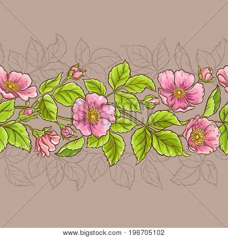 wild rose flowers vector pattern on color background