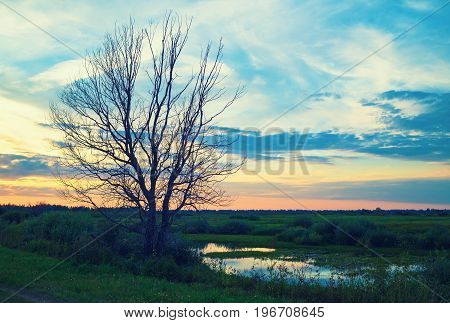 Old dry tree. Evening sky and a pond. Scenic sunset in the countryside. Toned image.