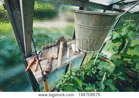 Gardening Hand Trowel small hoe metal bucket and other tools on the shelf inside the greenhouse.