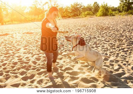 Dog labrador head outdoors in nature performs a commands. Dog and a young woman on the beach. Sun flare
