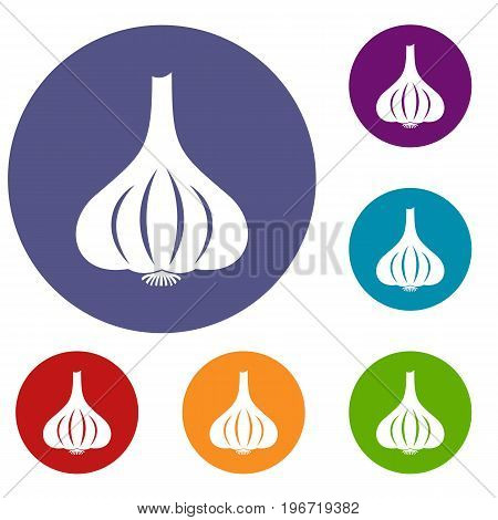 Garlic icons set in flat circle red, blue and green color for web