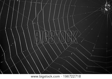 Large web on a dark gray background