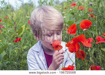 Nice blond boy with a red poppy in his hand.Boy in a poppy field springtime gathering wild flowers