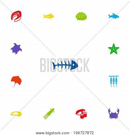 Collection Of Calamary, Asteroid, Clam And Other Elements.  Set Of 13 Food Icons Set.