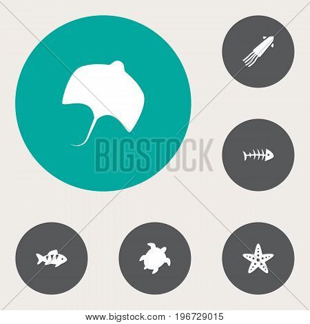 Collection Of Fish, Asteroid, Calamary And Other Elements.  Set Of 6 Food Icons Set.