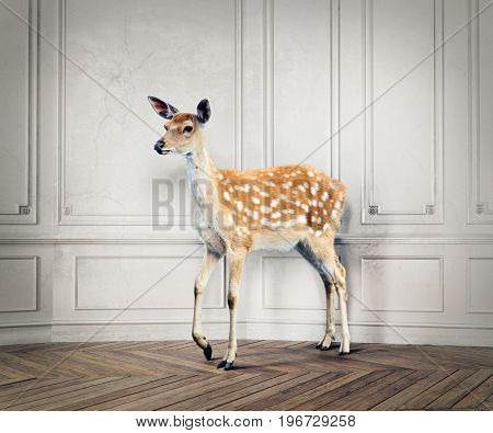 the wild deer in the luxury design room. photo combination concept