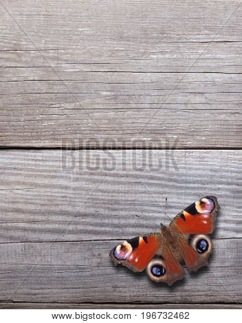 butterfly on old background of blackened wood panels