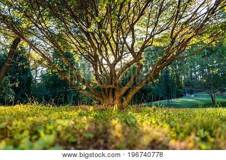 Beautiful Tree With Sun Peeking Through it