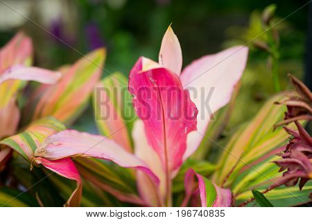Large Pink Leaf in Flowery Natural Scene