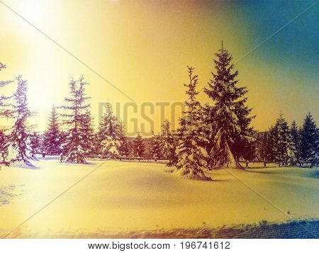Film Effect. Winter In Mountains. Fresh Powder Snow Covered Trees In Mountains. Minute Before Sunset