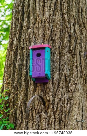 Beautiful wooden bird house on tree in New Hope USA