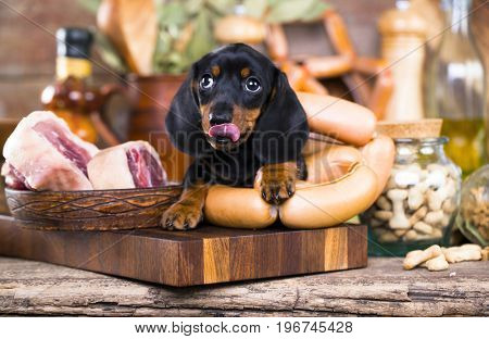 Puppy dachshund and meat in butcher's shop