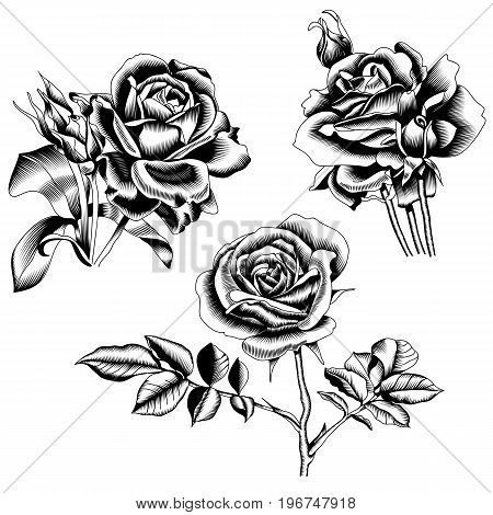 Black roses set, graphical roses, blossom roses, contour roses, monochrome roses, tattoo roses, decor tattoo, drawing tattoo, ink tattoo. Vector.