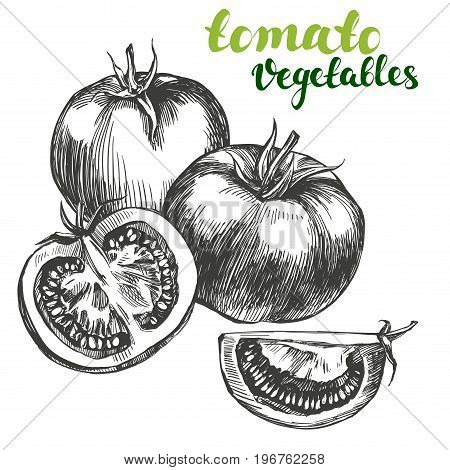 tomato vegetable set hand drawn vector illustration realistic sketch