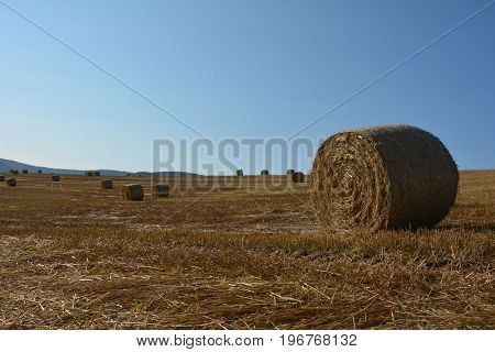 Some hay  bales lie in a landscape with many blue sky