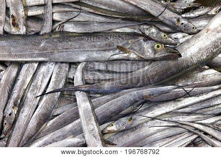 Fresh fish food market in maharashtra,Bombay india
