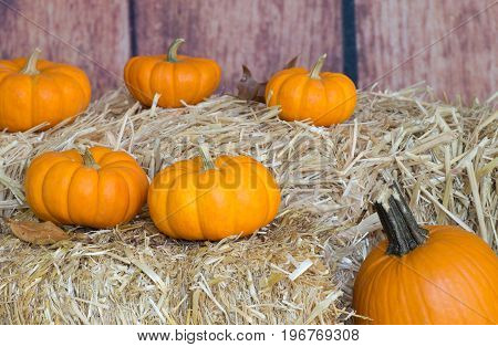 Pumpkins on straw bales with wooden background