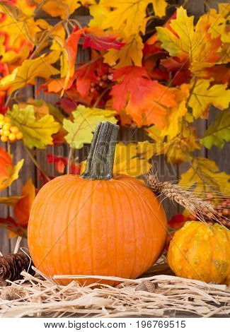 Pumpkin and squash with a colorful background of leaves