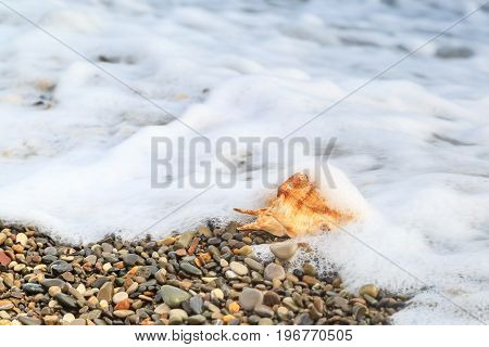 Seashell lies on the pebble beach in spindrift