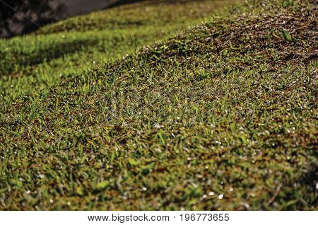 South America, Brazil, São Paulo, Monte Alegre do Sul, close-up, detail, view, sunny, sunrise, cold, day, tourist, rural, rustic, countrified, countryside, provincial, picturesque, scenic, colorful, tranquility, naive, gracious, grass, green, lawn,  sward